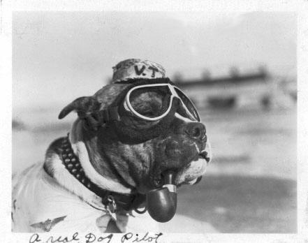 A Real Dog Pilot - Wings of Valor, Wings of Gold by Amy Waters Yarsinske